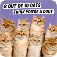 8 Out Of 10 Cats Rude Coaster