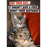 See This Cat. It Doesn't Give A Fuck About Your Birthday Rude Card