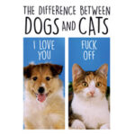 Difference Between Dogs and Cats Funny Birthday Card